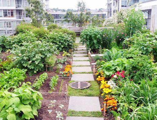 DOMUS 2020 | Urban Farming. L'importanza di ritornare all'autoproduzione alimentare